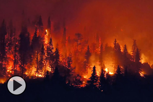 A pine forest burns red and white-hot.